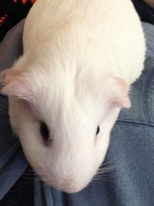 Princess Piggy Poo New Pals